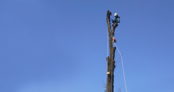 wycinka, pielegnacja drzew - prace arborystyczne na wysokości - oferta prac wysokościowych firmy seguro