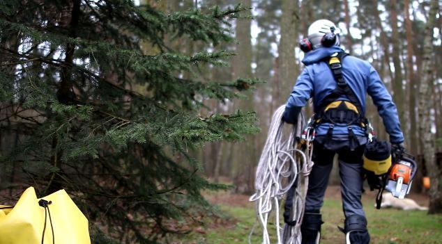 scinka-drzew-prace-wysokosciowe-seguro