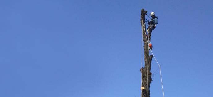 Wycinanie, przycinanie drzew metodą alpinistyczną- prace wysokościowe