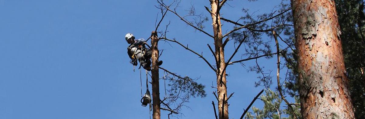 uslugi-arborystyczne-prace-na-wysokosci-scinka-drzew-dostep-linowy-alpinizm-przemyslowy